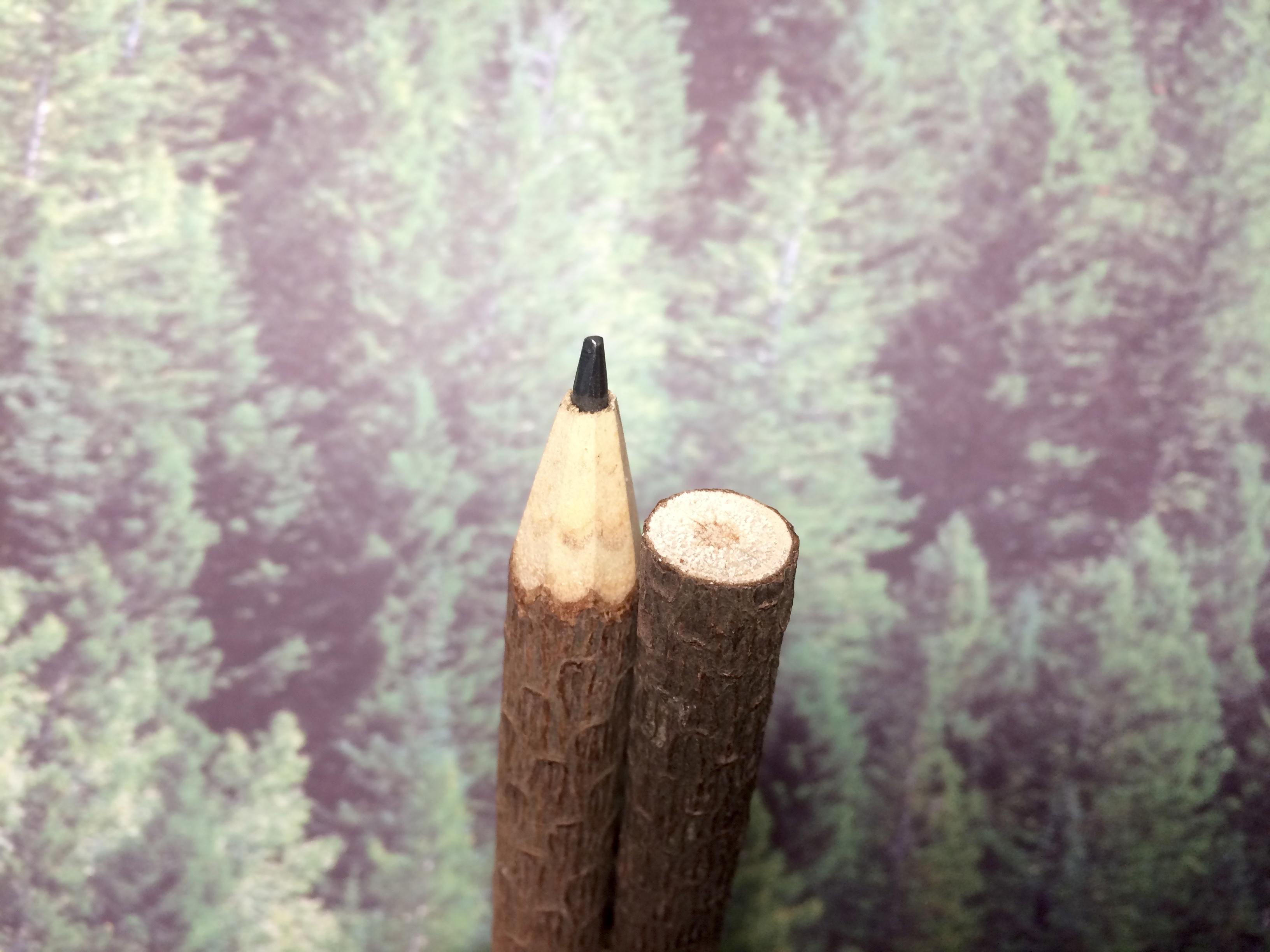 Lápices en ramas de madera